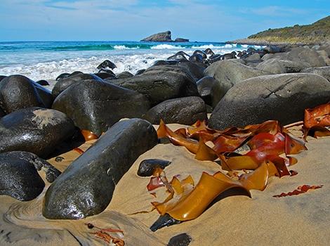 Rocks, Bruny Island, Tasmania