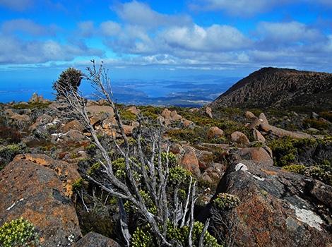 Mount Wellington Summit, TA