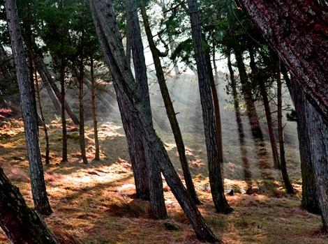 'Fairy Glen', Ilkley Moor