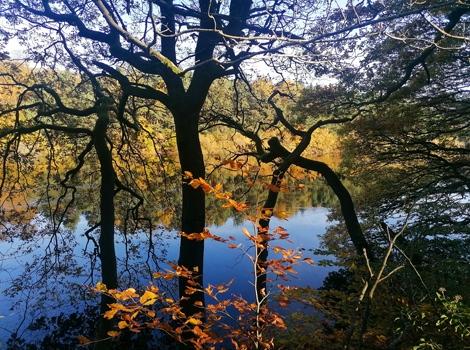 Agden Reservoir, Bradfield, 2