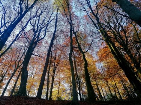 Autumn Trees, Bradfield