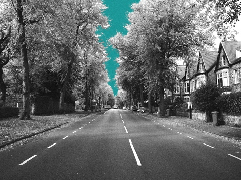 Trees, Psalter Lane